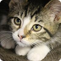Adopt A Pet :: Georgeann - Medina, OH