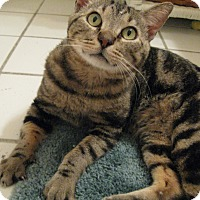 Adopt A Pet :: LINUS - Brea, CA