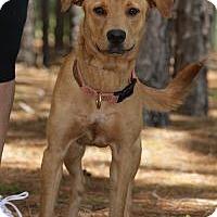 Adopt A Pet :: Bebe - Minneola, FL