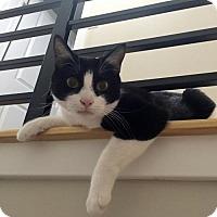 Adopt A Pet :: Betty - Philadelphia, PA