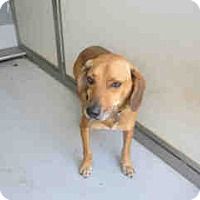 Adopt A Pet :: Bama/Rusty - Newnan City, GA
