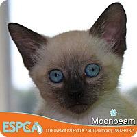 Adopt A Pet :: Moonbeam - Enid, OK