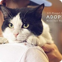Adopt A Pet :: Scarecrow - Edwardsville, IL