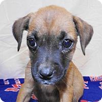 Adopt A Pet :: Jennifer - Oxford, MS