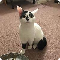 Adopt A Pet :: Tip - Wasilla, AK