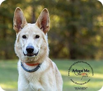 German Shepherd Dog Dog for adoption in Montgomery, Alabama - Hagan