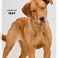 Adopt A Pet :: Izzy - Wichita, KS