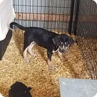 Adopt A Pet :: Copter - Brunswick, ME