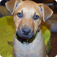 Adopt A Pet :: MAXWELL - Plainfield, CT