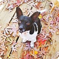 Adopt A Pet :: Arnold - Kingston, TN