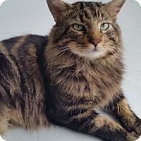 Adopt A Pet :: Magnum - Sarasota, FL