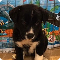 Adopt A Pet :: Martina - Chico, CA