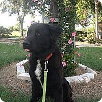 Adopt A Pet :: KC - El Campo, TX