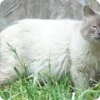 Adopt A Pet :: Barrett - Ennis, TX