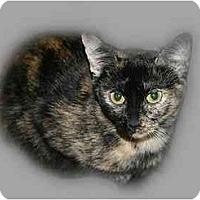 Adopt A Pet :: Cocoa - Montgomery, IL