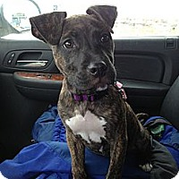 Adopt A Pet :: Rosie - Glenview, IL