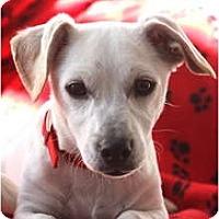 Adopt A Pet :: MAC - san diego, CA