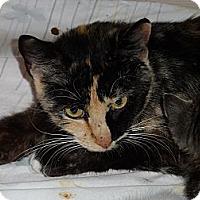 Adopt A Pet :: Jewel - Tarboro, NC