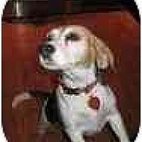 Adopt A Pet :: Harley Dee - Phoenix, AZ