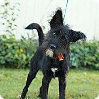 Adopt A Pet :: Pepper - Lancaster, OH
