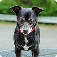 Adopt A Pet :: Macho - Port Washington, NY