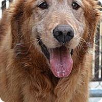 Adopt A Pet :: Mason - Windam, NH