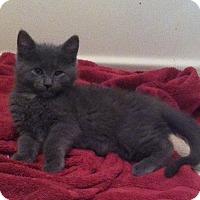 Adopt A Pet :: Spike - Riverhead, NY
