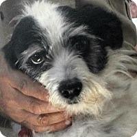 Adopt A Pet :: Carla - Phoenix, AZ