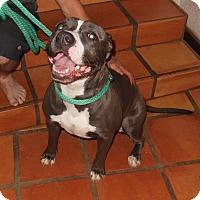 Adopt A Pet :: Nina - San Diego, CA