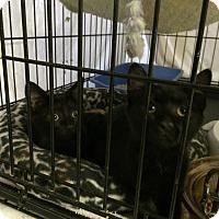 Adopt A Pet :: Carbon - Byron Center, MI