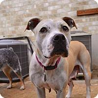Adopt A Pet :: Sunkist - Austin, TX