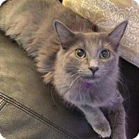 Adopt A Pet :: Penelope - DFW Metroplex, TX