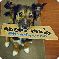 Adopt A Pet :: Thena-Adopted! - Detroit, MI