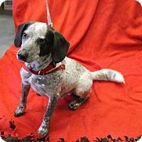 Adopt A Pet :: Petey - Delaware, OH