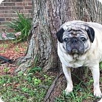 Adopt A Pet :: Odin - Grapevine, TX