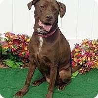Adopt A Pet :: Lola - Lebanon, ME