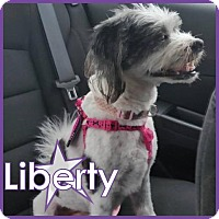 Adopt A Pet :: Liberty - Excelsior, MN