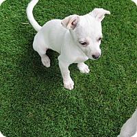 Adopt A Pet :: Jasper - San Antonio, TX
