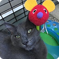 Adopt A Pet :: Mystery, Micah, Mao - Redwood City, CA