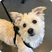 Adopt A Pet :: Buttons - Adoption Pending - Gig Harbor, WA