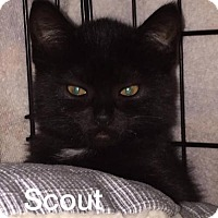 Adopt A Pet :: Scout - Whitewater, WI