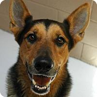 Adopt A Pet :: Trevor - Hilton Head, SC