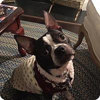 Adopt A Pet :: Porter - High Point, NC