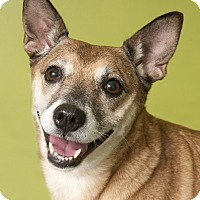 Adopt A Pet :: Bella - Chicago, IL