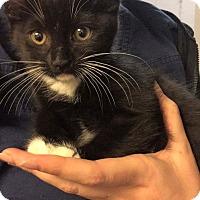 Adopt A Pet :: Little foot - Oakley, CA