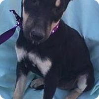Adopt A Pet :: Onyx - cupertino, CA