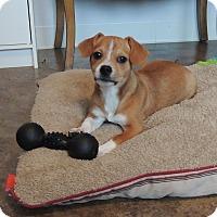 Adopt A Pet :: Franklin - House Springs, MO