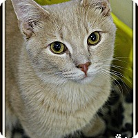 Adopt A Pet :: Pretzel - Dunkirk, NY