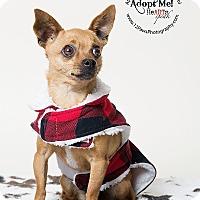 Adopt A Pet :: Sparky - Apache Junction, AZ
