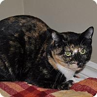 Adopt A Pet :: Hope Drayton - Edmonton, AB
